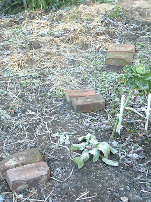 A frosty, mulched garden bed with brick stepping stones