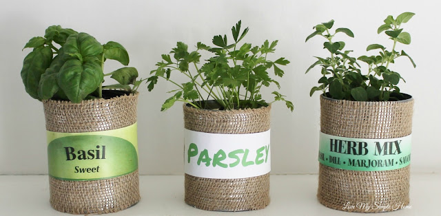 DIY Herb Planters in Upcycled Cans