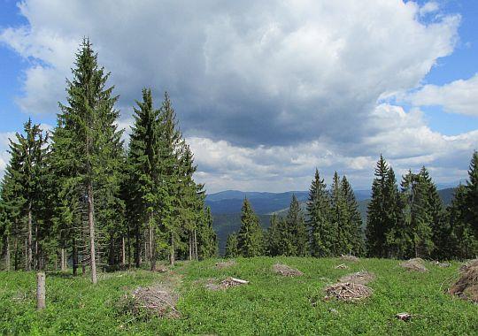 Widok z grzbietu w kierunku północnym.