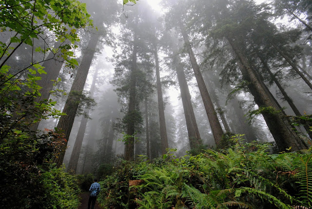 Nine Eco-Friendly Resolutions to Save the World in 2019 Walking in the Redwoods