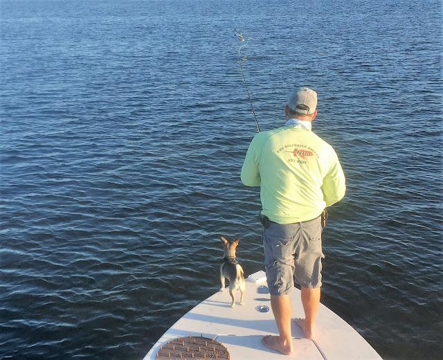 Sight fish charters florida keys flats fishing report for Middle keys fishing report