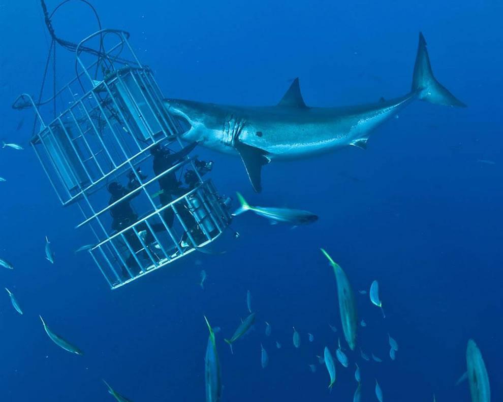 اسماك القرش تحت الماء Adrenaline-junkies-i