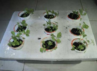 hidroponik sayuran sistem kultur air sederhana