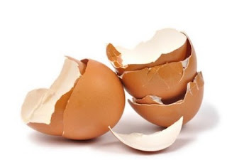 Limbah kulit/cangkang telur, kulit pisang, kulit jagung, dan kulit lainnya