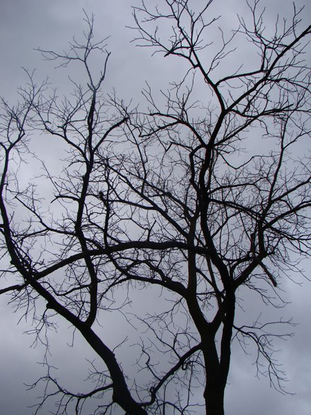 image of a barren tree in silhouette against a silvery blue sky