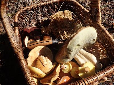 grzyby 2018, grzyby w październiku, grzyby w okolicach Krakowa, siedzuń sosnowy, maślak żółty, borowiki