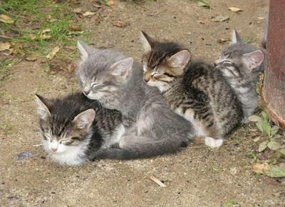 Imagen tierna de gatitos durmiendo en fila