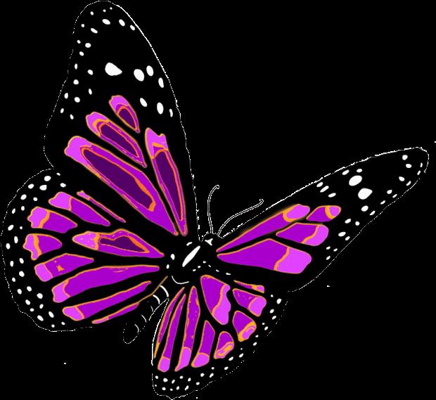 95 Koleksi Gambar Binatang Kartun Kupu-kupu Terbaru