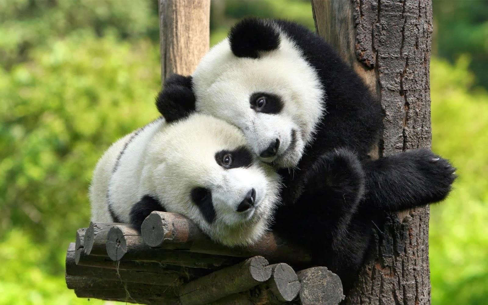 Iets Nieuws Onze Mooie Liefde   De Mens en de Natuur &LK67
