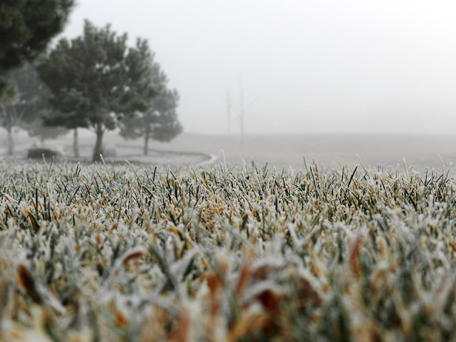 Foggy Winter Landscape: grow creative blog
