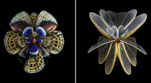 00-Seb-Janiak-Photographs-of-Butterfly-Wings-to-Resemble-Flowers-www-designstack-co