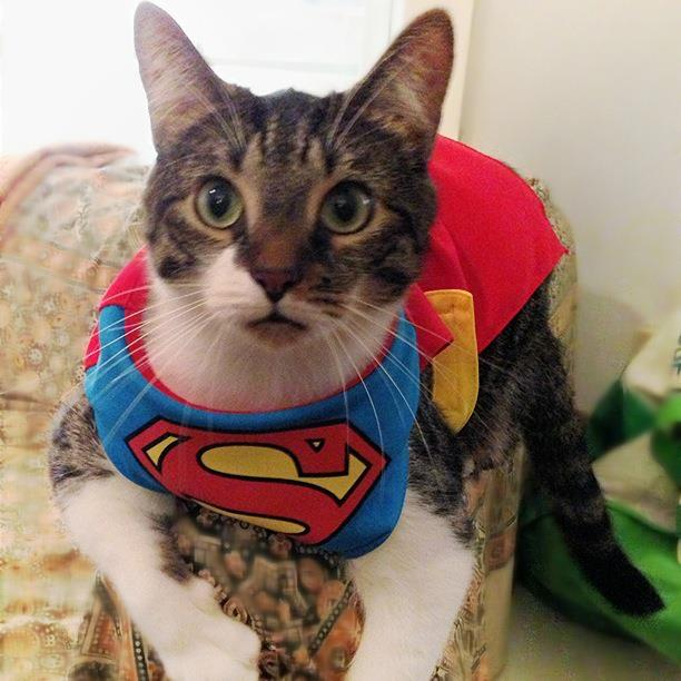 funny cat dressed up - photo #16