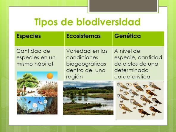 Tipos de Biodiversidad