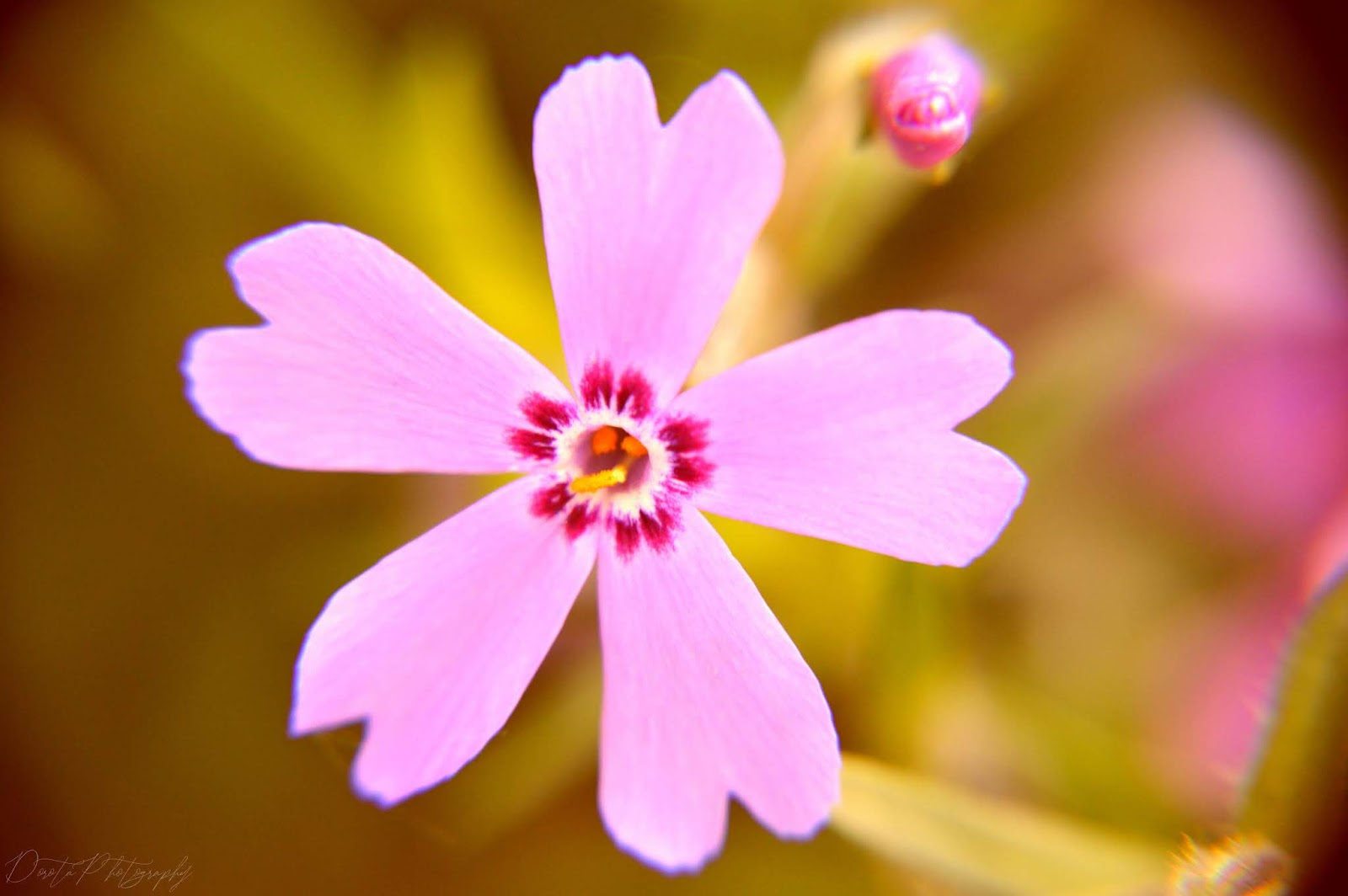 pobierz za darmo, tapety na pulpit, rośliny i kwiaty na fotografiach