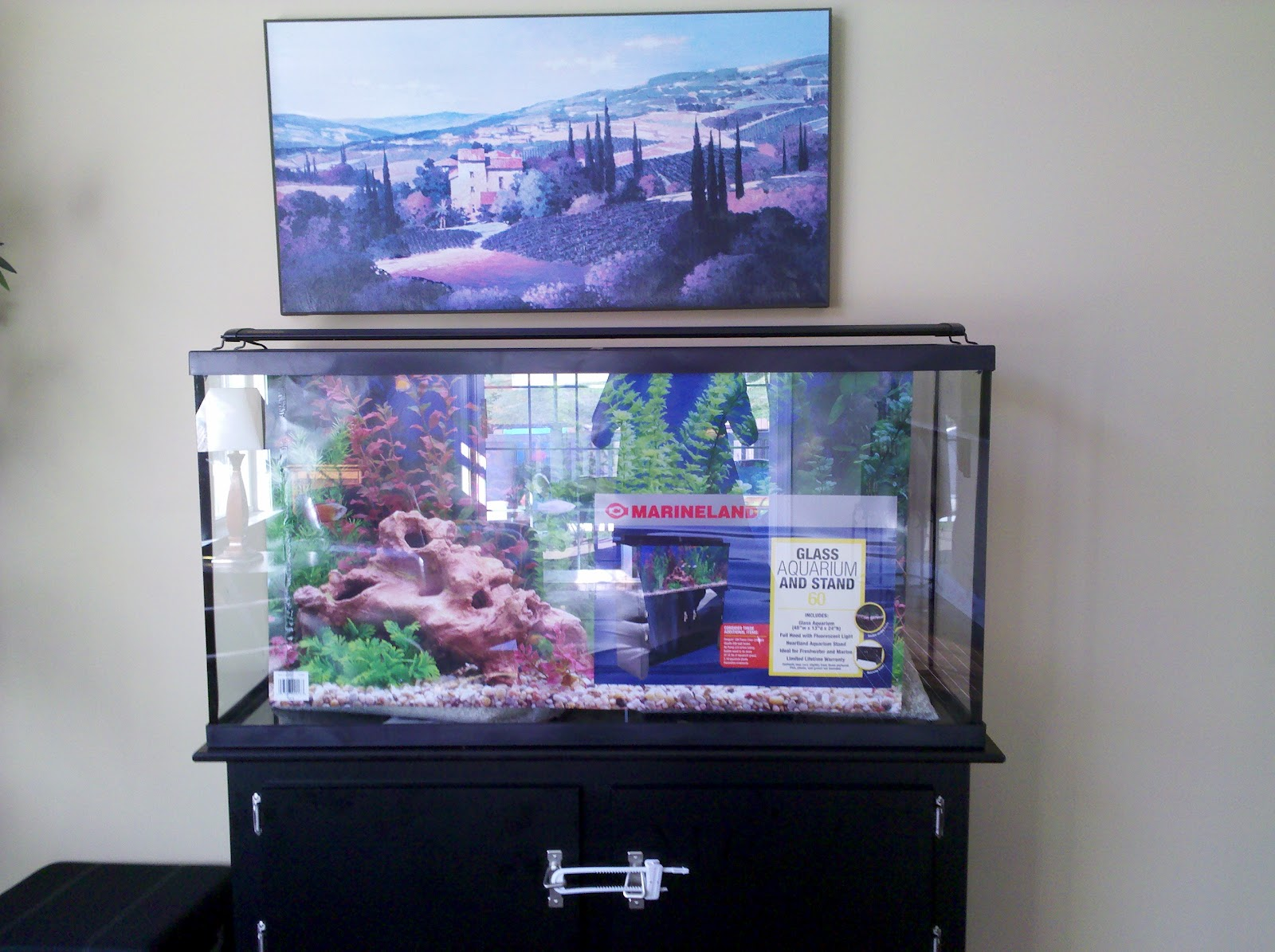 60 Gallon Aquarium Tank
