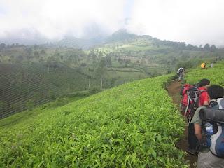 Informasi Jalur Pendakian Gunung Cikuray Yang Pas Untuk Anda