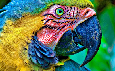 parrot close up widescreen resolution hd wallpaper