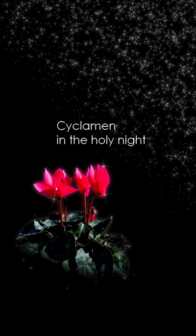 Cyclamen in the holy night