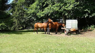 Pferde nahe der Sprachgrenze