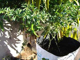 Blogsownkitchen Grow Bags From Kerala Krishi Bahavan
