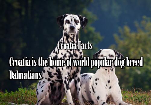 Koja je najpopularnija vrsta pasa?  Dalmatinci