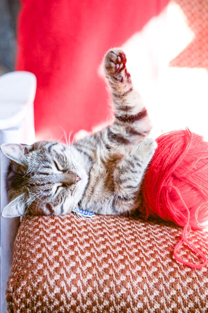 kot śpi z kulą włóczki w RoomToLove