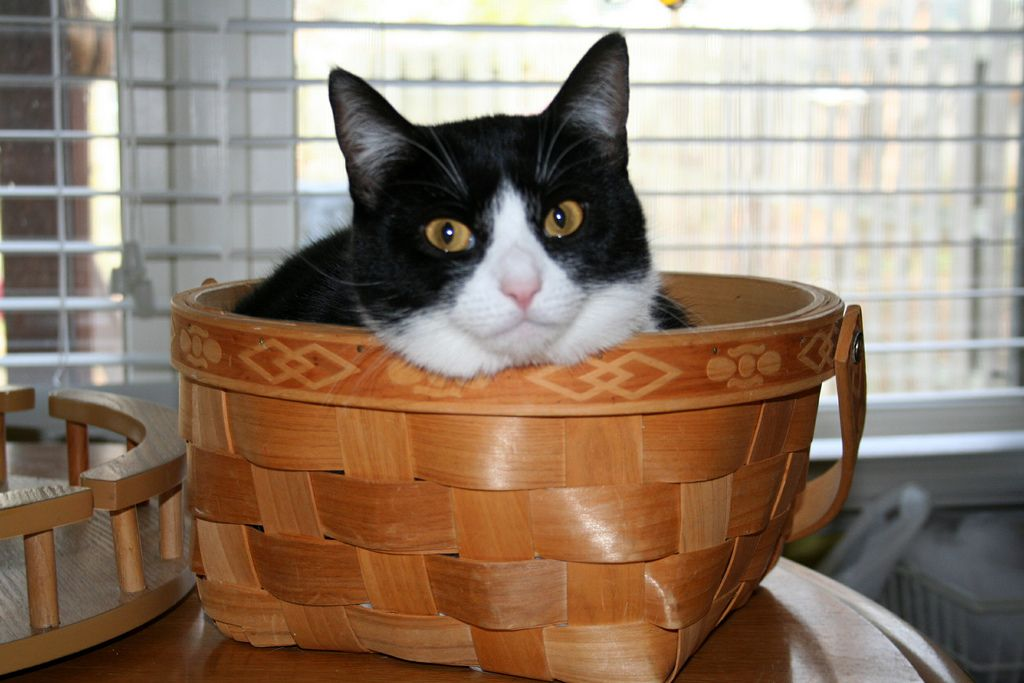 27. Macy in a basket! by angelicredhead