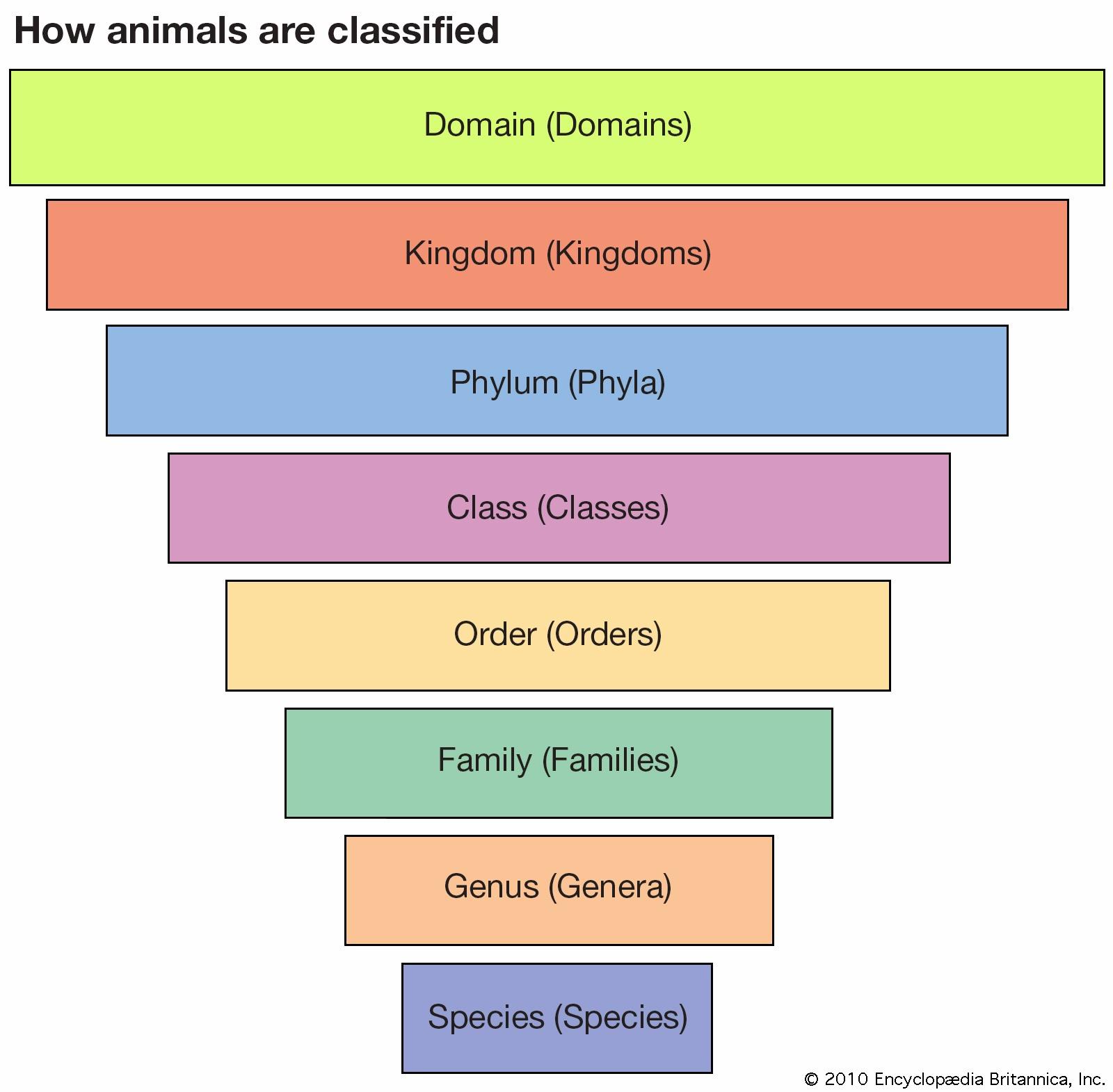 Kingdom Order Microbiology