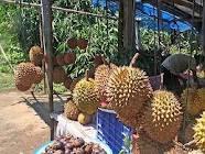 durian membuat kulit awet muda