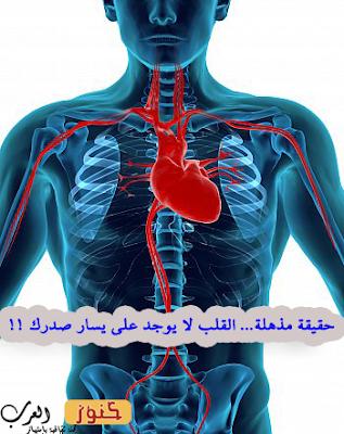 حقيقة مذهلة... القلب لا يوجد على يسار صدرك !!