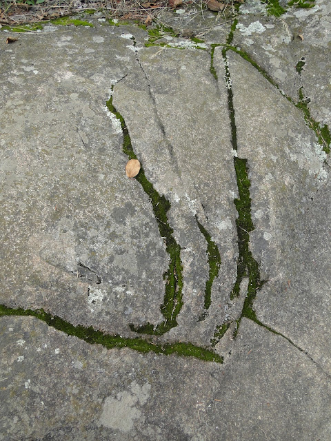 moss growing in cracks
