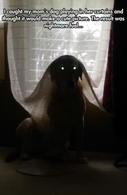 Funny dog pictures : I think i see a ghost