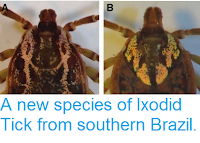 https://sciencythoughts.blogspot.com/2015/01/a-new-species-of-ixodid-tick-from.html