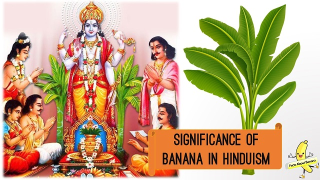 Significance of Banana in Hinduism