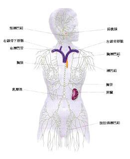 淋巴系統,淋巴排毒,提升免疫力的方法,適合淋巴排毒的精油