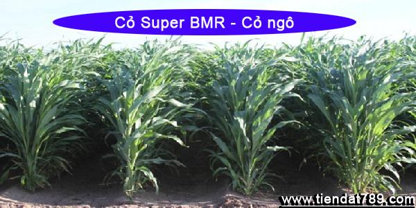 Cỏ lai Super BMR