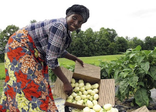 Janine Ndagijimana  grows Rwandan bitter eggplants in Vermont