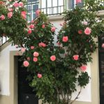 riitta reissaa, portugal, instagram travel thursday, lusitano
