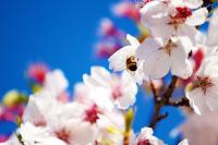 Papier peint printemps fleurs