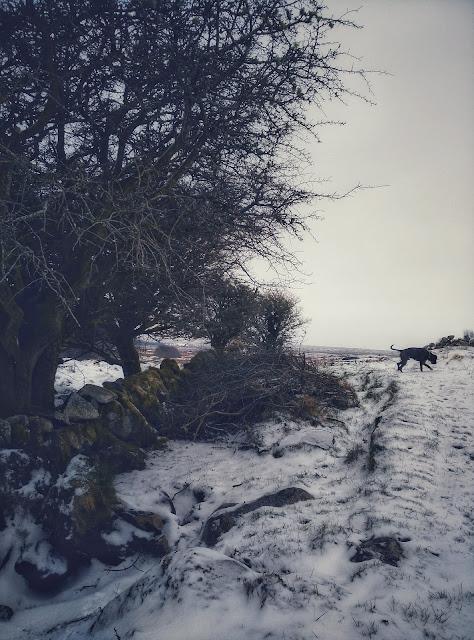 snow, tree, dog