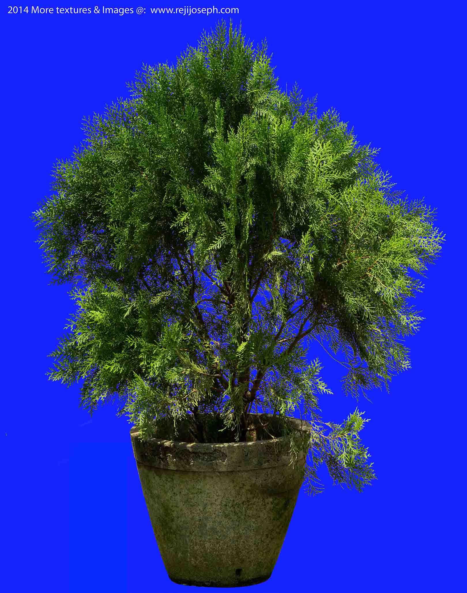 Cypress Garden Plant Texture 00002