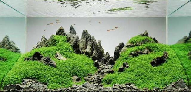 Sejarah Aquascape di Indonesia