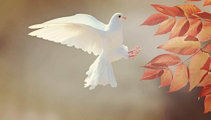Poem on Nature in Hindi - प्रकृति पर कुछ कविताएँ