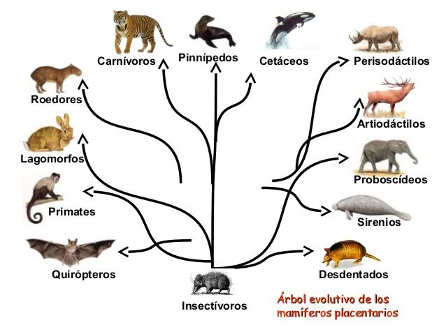 Lobos Perros Siluetas Mamíferos: APRENDO CON ANA DELIA: Octubre 2016