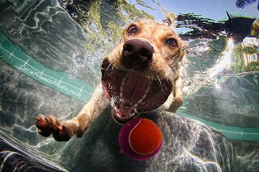 Photogallery of miracles of light: Underwater Dogs photo Seth Casteel