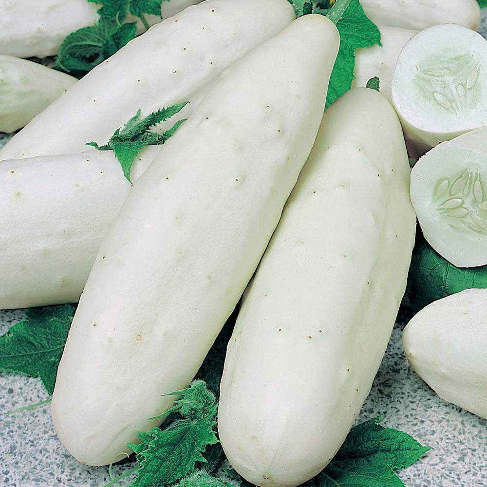Seralar ve açık zemin için en iyi salatalık çeşitleri