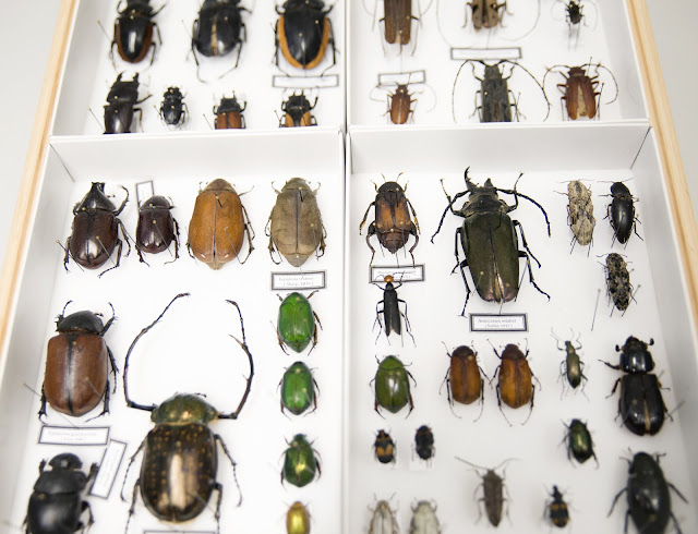 Research project to investigate impact of extreme weather on biodiversity and pollinating insects