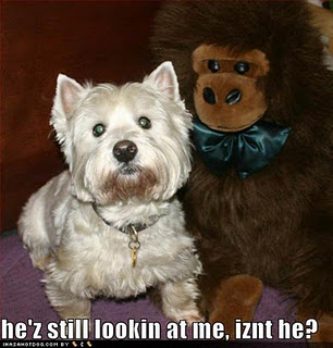 Picture Gallery: Dog Quotes Funny Picture, Dog Quotes and ...