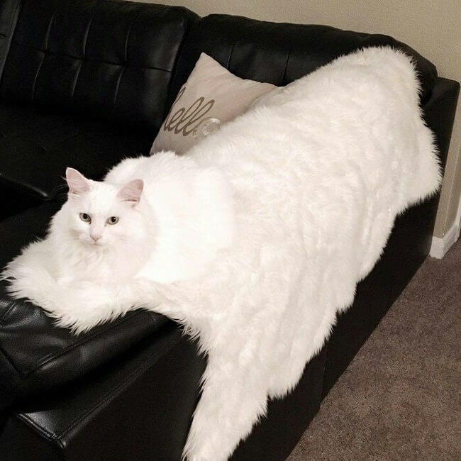 27 Pictures Show That The World Has A Plan For All Of Us - A cat. Camouflage level God.