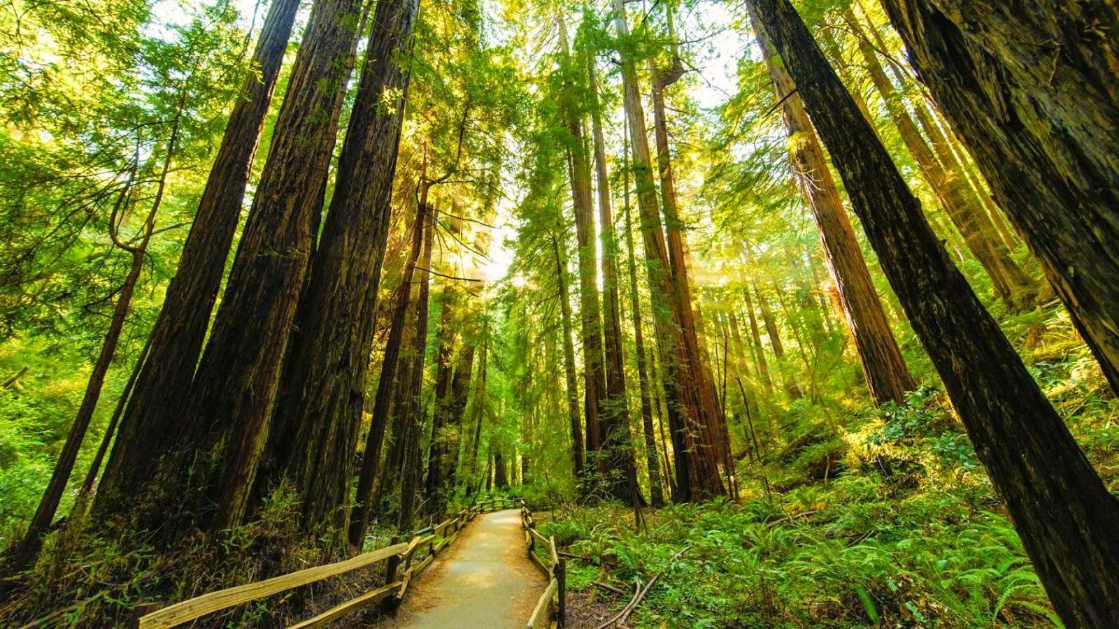 Spiritual Awareness The Magic Of Muir Woods